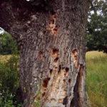 Tree rotting